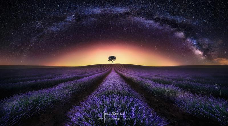 Lavender Field and Milky Way - Guadalajara