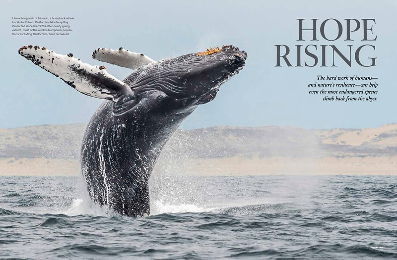 National Wildlife Magazine June/July 2020 issue.