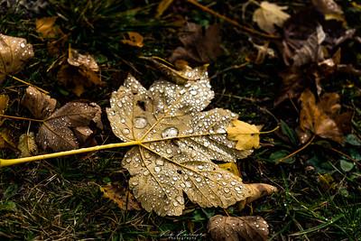 automne aiguilles arves