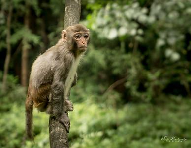 Monkey in zhangjiajie national park