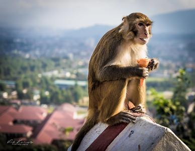 Ice cream in monkey temple