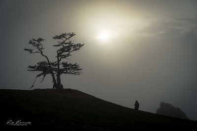 L'arbre chamanique de shaman rock