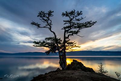 Couché de soleil sur l'arbre de shaman rock