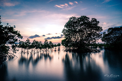Mangrove swamp sunset