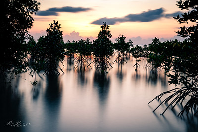 Mangrove swamp sunset