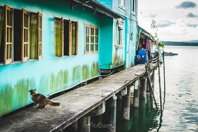 The cat paradise