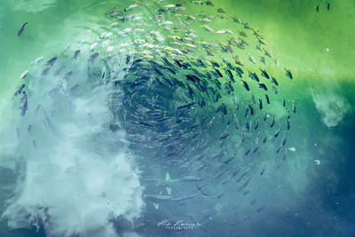 Fish in the cloud
