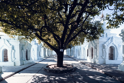 Tree in Kuthodaw pagoda