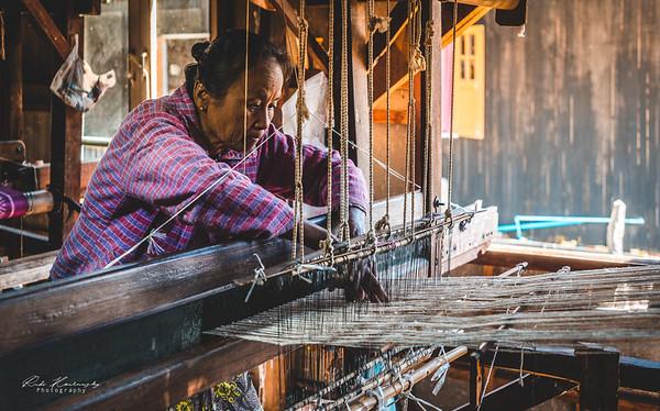 Lotus weaver