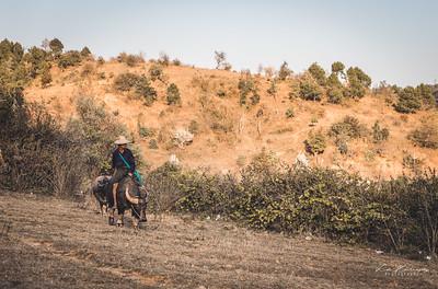 Riding a buffalo