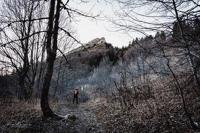 La pinéa