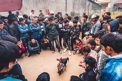 chicken fight in vietnam