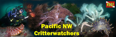 Critterwatchers Newsletter