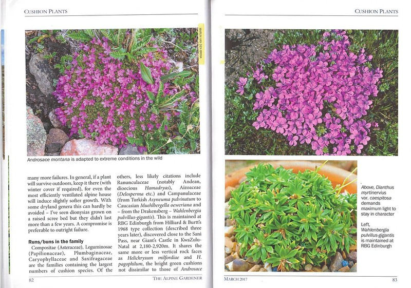 Cushion Plants, AGS, part two
