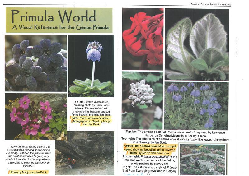 Primroses, The Quarterly Of The American Primrose Society, Autumn 2012 Vol.70 nr.4, page 16/17, Primula World