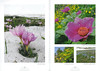 Een voorjaarsronde door Noordoost-Turkije (NRV No 98 Februari 2010) p. 28 - 29