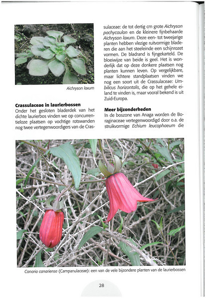Tenerife, Christmas and Newyear planthunting  (NRV No. 94 Februari 2009 p. 28)
