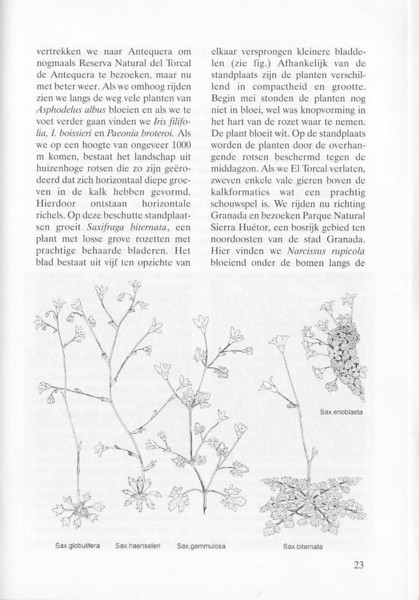 Spring flora of Andalusia Spain (NRV, No. 80, Aug 2005, p. 23)