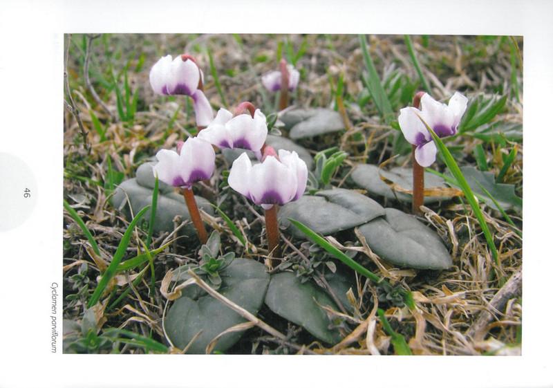 Een voorjaarsronde door Noordoost-Turkije (NRV No 98 Februari 2010) p. 46