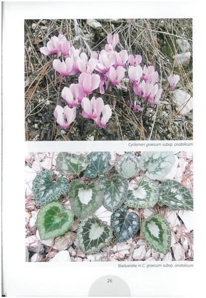 Autumn in Southwest Turkey (NRV No. 93 November 2008 p. 26)