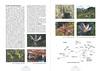 Op zoek naar herfstbloeiers. Centraal en zuid Turkije.<br /> Folium Alpinum 106, page 34/35 Mei 2012