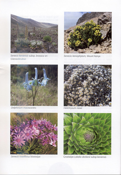 The Alpine Flora of East Africa (NRV, No. 88, Aug 2007, p. 16)