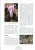 Autumn in Southwest Turkey (NRV No. 93 November 2008 p. 14)