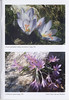 Autumnflora of Central Greece (NRV, No. 82, Feb 2006, p. 44)