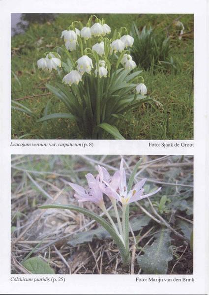 Autumn flowering plants of the Peloponnese, Greece (NRV, No. 85, Nov 2006, p. 33)