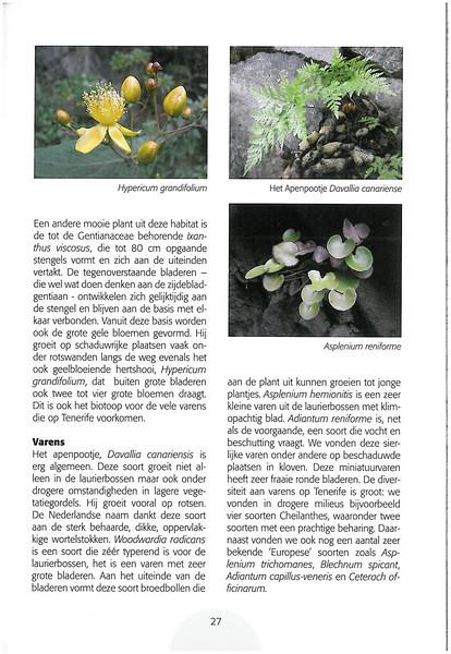 Tenerife, Christmas and Newyear planthunting  (NRV No. 94 Februari 2009 p. 27)