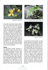 Tenerife, Christmas and Newyear planthunting  (NRV No. 94 Februari 2009 p. 27)
