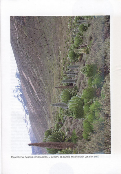 The Alpine Flora of East Africa (NRV, No. 88, Aug 2007, p. 9)