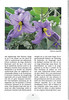 Tenerife, Christmas and Newyear planthunting  (NRV No. 94 Februari 2009 p. 29)