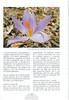Autumn in Southwest Turkey (NRV No. 93 November 2008 p. 19)