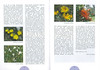 De flora van de Cordillera Blanca (Noord Peru) deel 1
