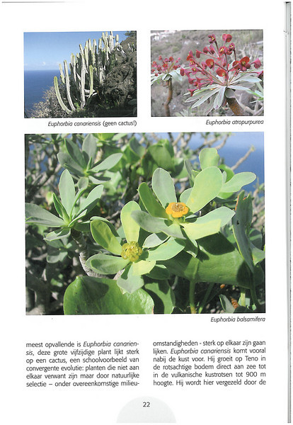 Tenerife, Christmas and Newyear planthunting  (NRV No. 94 Februari 2009 p. 22)