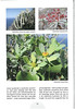 Tenerife, Christmas and Newyear planthunting  (NRV No. 94 Februari 2009 p. 22)