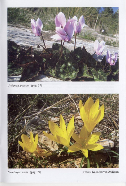 Autumnflora of Central Greece (NRV, No. 82, Feb 2006, p. 40)