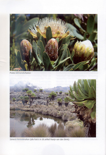 The Alpine Flora of East Africa (NRV, No. 88, Aug 2007, p. 12)