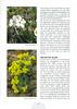 Een voorjaarsronde door Noordoost-Turkije (NRV No 98 Februari 2010) p. 47