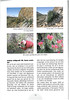Tenerife, Christmas and Newyear planthunting  (NRV No. 94 Februari 2009 p. 32)