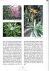 Tenerife, Christmas and Newyear planthunting  (NRV No. 94 Februari 2009 p. 26)
