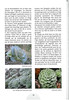 Tenerife, Christmas and Newyear planthunting  (NRV No. 94 Februari 2009 p. 30)