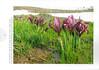 Een voorjaarsronde door Noordoost-Turkije (NRV No 98 Februari 2010) p.6