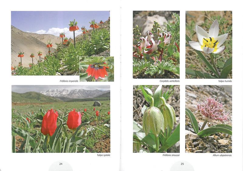 Plantenreis door Iran (NRV Folium Alpinum No. 95 May 2009 p. 24–25)