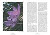 Op zoek naar herfstbloeiers. Centraal en zuid Turkije.<br /> Folium Alpinum 106, page 32/33 Mei 2012