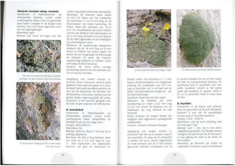Dionysia in focus (NRV No. 96 August 2009 p. 28–29)