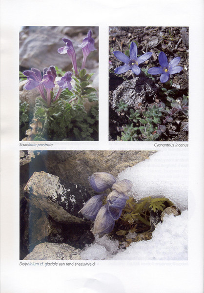Autumn at the Mount Everest (NRV, No. 88, Aug 2007, p. 34)