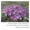 Een voorjaarsronde door Noordoost-Turkije (NRV No 98 Februari 2010) p.7