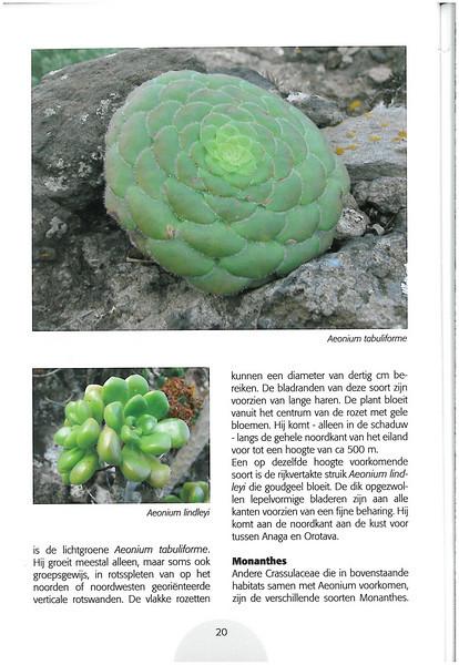 Tenerife, Christmas and Newyear planthunting  (NRV No. 94 Februari 2009 p. 20)